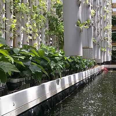 Aquaponic Greenhouse Workshop